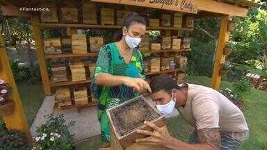 Conheça as abelhas Uruçu, espécie sem ferrão que Ivete Sangalo cria em casa - As abelhas chamaram a atenção depois que a cantora publicou um vídeo no meio de um enxame.