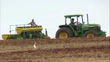 Excesso de chuva prejudica lavouras de soja e milho no Paraná - Em Corbélia, por exemplo, no oeste do estado, o agricultor João Batista Afonso Pereira conta que com tanta água caindo na sua plantação de soja, o resultado foi o aumento de doenças e perdas na produtividade.