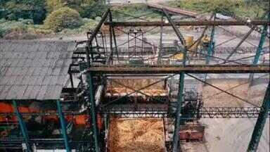 Falta de chuvas em Alagoas afeta produção da cana-de-açúcar - Expectativa era colher 18 milhões de toneladas, mas por causa da seca safra deve ficar em torno de 17 milhões, volume semelhante ao do ano passado.