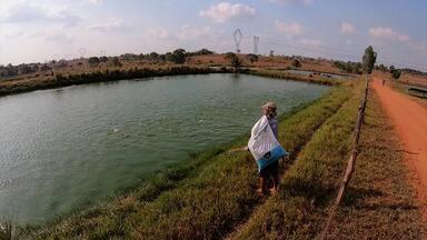 Produtores de soja do Maranhão aproveitam vazio sanitário para cuidar do solo - Produtores de soja do Maranhão aproveitam vazio sanitário para cuidar do solo