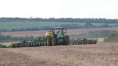 Agricultores aproveitam alta no milho para investir no grão - Depois de colher a soja, produtores plantam a segunda safra do milho.
