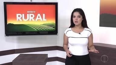 Confira a edição do Inter TV Rural deste domingo, 28 de fevereiro - Programa mostra as curiosidades do campo, condições do mercado e as mais diferentes experiências de quem decide viver da terra ou do mar.