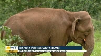 Ministério Público de Ribeirão Preto quer elefanta Bambi de volta - Ministério Público de Ribeirão Preto quer elefanta Bambi de volta