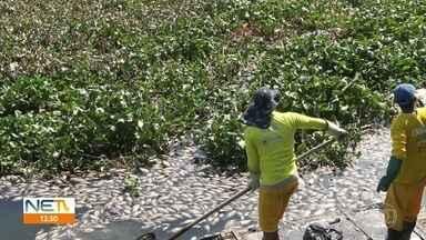 Peixes mortos são retirados do Canal do Fragoso, em Olinda - Prefeitura informou que também começou a retirar as baronesas.