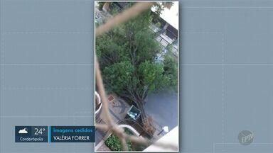 Imagens mostram árvore caída no bairro Cambuí em Campinas; rua foi interditada - Segundo a Emdec, empresa responsável por organizar o trânsito da cidade, ninguém ficou ferido durante o acidente.