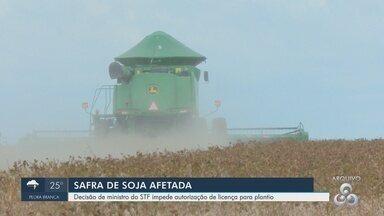STF impede autorização de licença para plantio e produção de soja é afetada no Amapá - STF impede autorização de licença para plantio e produção de soja é afetada no Amapá