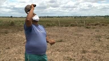 No Dia de São José, agricultores pedem por colheita farta - Eles plantaram feijão no dia do padroeiro, como manda a tradição.