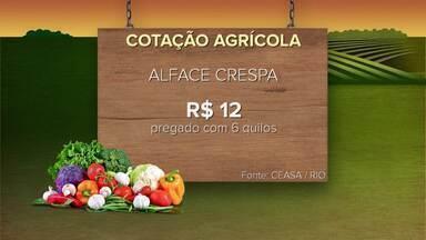 Confira a cotação agrícola neste domingo (21) - Inter TV Rural traz informações sobre a cotação agrícola.