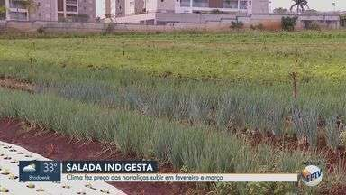 Clima faz preço das hortaliças subir em fevereiro e março - Produtor rural Sérgio Luis Paris fala sobre o assunto.