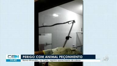 Bairro do Crato registra aparecimento de cobras - Confira mais notícias em g1.globo.com/ce