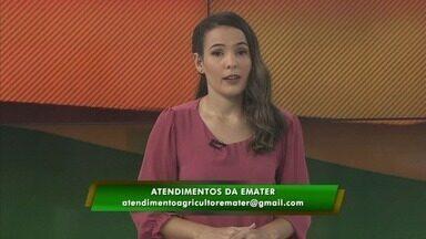 Emater retoma atendimento on-line por causa da pandemia - Medida também foi adotada pelo Incra.