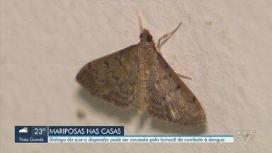 Moradores da Baixada Santista estão preocupados com aparecimento de mariposas - Biólogo explica que a dispersão pode ter sido causada pelo fumacê de combate à dengue.