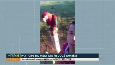 Telespectadores compartilham momento interessante no Meio-Dia Paraná - Arara visita morador de Santa Cruz de Monte Castelo e capivaras atravessam a rua na faixa.