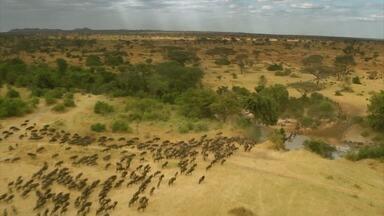Globo Repórter - 09/04/2021 - Planícies vastas, muita vida selvagem, cenários, flagrantes de tirar o fôlego, e animais de várias espécies. Assim é o Parque Serengeti, na África.