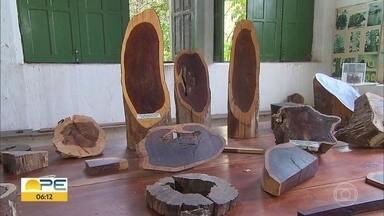 No dia do Pau Brasil, conheça a planta que deu nome ao país - Simbolo nacional, esta árvore começou a ser explorada em 1.503