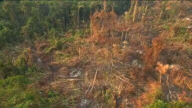 Empresas britânicas ameaçam boicote a produtos brasileiros por causa de desmatamento - Em carta aberta, empresários britânicos do ramo da alimentação pedem que senadores brasileiros desistam de projeto de lei que regulariza ocupação de terras públicas.