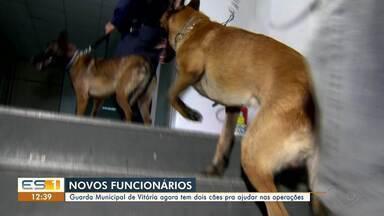 Guarda Municipal de Vitória recebe dois cães para ajudar nas operações - Assista ao vídeo.