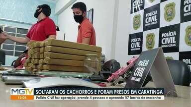 PC prende quatro pessoas e apreende 57 barras de maconha em Caratinga - Suspeitos soltaram cães contra os investigadores, mas animais foram contidos e homens presos.