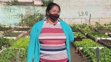 """Coordenadora de hortas é """"mãezona"""" de 130 famílias no Tatuquara - Bairro ficou mais bonito e horta é ponto turístico da região"""
