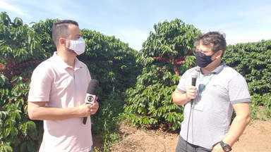 Emater cria cartilha com orientações para a colheita do café - Um dos objetivos é diminuir os riscos de contaminação por Covid-19 no campo.