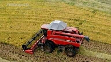 Tocantins é o terceiro maior produtor de arroz do país; saiba mais sobre a produção - Tocantins é o terceiro maior produtor de arroz do país; saiba mais sobre a produção