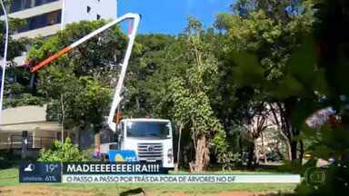 Poda de árvores preserva vegetação e evita acidentes - Conheça o passo a passo por trás do serviço, que no DF é executado pela Novacap e outros órgãos do GDF.