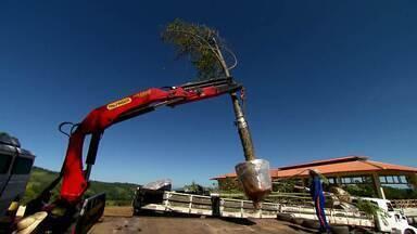 Veja os destaques do Globo Rural deste domingo (23/05/2021) - Veja como são feitas as árvores adultas dos projetos de paisagismo, as quebradeiras de coco no Maranhão, o café em Minas Gerais e muito mais.