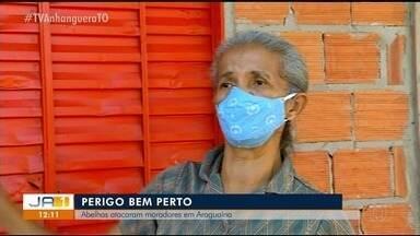 Duas pessoas ficam feridas e seis cachorros são mortos após ataque de abelhas em Araguaína - Duas pessoas ficam feridas e seis cachorros são mortos após ataque de abelhas em Araguaína