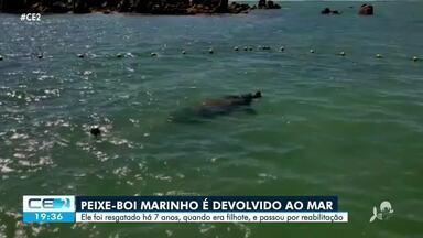 Primeiro peixe-boi reabilitado no Ceará é solto no mar - Confira mais notícias em g1.globo.com/ce