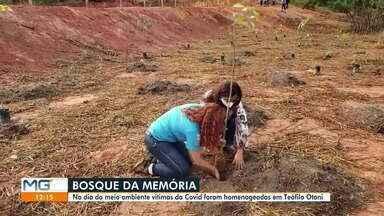 Vítimas da Covid são lembradas no dia Mundial do Meio Ambiente - Bosque da Saudade foi criado em Teófilo Otoni.