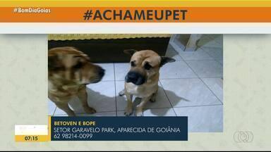 #AchaMeuPet: ajude donos a encontrarem animais perdidos em Goiás - Caso tenha visto algum dos pets perdidos, entre em contato pelos telefones descritos na imagem.