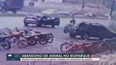 Gavião com sinais de cárcere é abandonado na carroceria de carro em frente ao Bioparque - Gavião com sinais de cárcere é abandonado na carroceria de carro em frente ao Bioparque