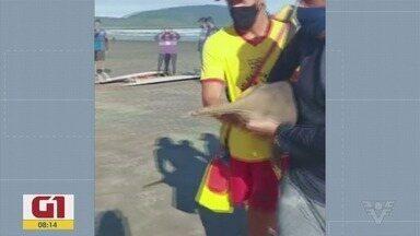 Confira as notícias que são destaque no G1 - Toninha morreu na praia do José Menino, em Santos.