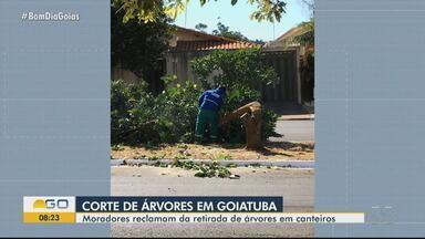 Moradores reclamam de cortes de árvores em canteiros de Goiatuba - Moradores dizem que árvores são cortadas de uma rua da cidade.