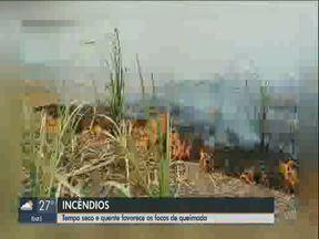 São Carlos e Pirassununga registram vários focos de incêndio - Em São Carlos uma área da mata foi atingida na manhã desta segunda-feira. No domingo (8), Pirassununga teve locais com fogo.