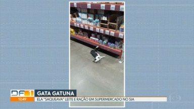 """Uma gata """"saqueia"""" ração e leite num mercado no Sia - Depois de uma semana, o supermercado acionou uma Ong para resgatar a gata do local."""