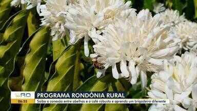Veja os destaques do programa Rondônia Rural de domingo, 15 - Matéria sobre cafeicultura e a polinização e receita de brigadeiro sem leite condensado.