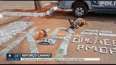 Cães farejadores da PM ajudam no combate ao tráfico de drogas - Os animais são treinados para identificar diversos tipos de entorpecentes.