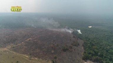 Parte 1: Desmatamento na Amazônia está 17% maior que em 2020 - Este é o maior número registrado desde 2016.