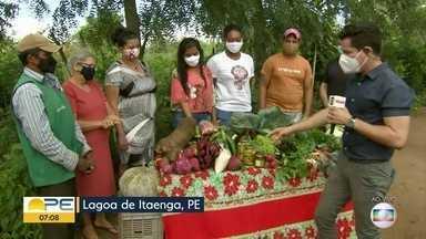 Projeto de produtos orgânicos ajuda agricultores em Lagoa do Itaenga - Produtores do município aprenderam a manipular os alimentos, garantindo melhores vendas.