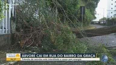Queda de árvore de grande porte deixa casas sem energia e trânsito interditado na Graça - Caso aconteceu durante a madrugada desta quarta-feira (1º), na rua Djalma Ramos.