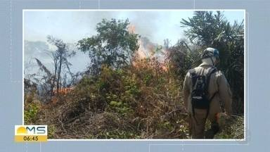 Mês de agosto no Pantanal terminou com números de focos de incêndios maiores que 2020 - Bom Dia MS