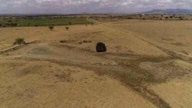 Presidente da AMA fala sobre ações planejadas voltadas para a seca verde - Objetivo é diminuir efeitos do fenômeno no semiárido alagoano.