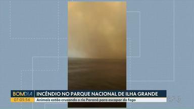 Animais estão cruzando o rio Paraná para escapar do fogo - Incêndio é no parque nacional de Ilha Grande