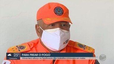 MG terá reforço na fiscalização dos incêndios criminosos em matas - MG terá reforço na fiscalização dos incêndios criminosos em matas