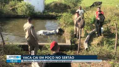 Vaca cai em poço no Sertão da Paraíba - Bombeiros foram acionados para salvar o animal.