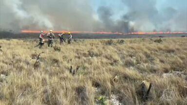 Equipes combatem incêndios florestais que ameaçam a Chapada dos Veadeiros - Fogo já atingiu 8 mil hectares e chegou a 20 km de distância de onde o incêndio começou.