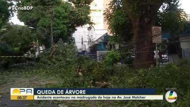 Árvore cai e trânsito fica bloqueado na avenida Governador José Malcher, em Belém - Árvore cai e trânsito fica bloqueado na avenida Governador José Malcher, em Belém