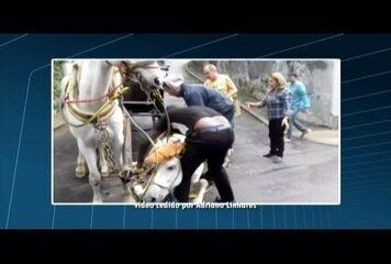 Cavalo de charrete turística cai e quase é enforcado em Petrópolis, no RJ