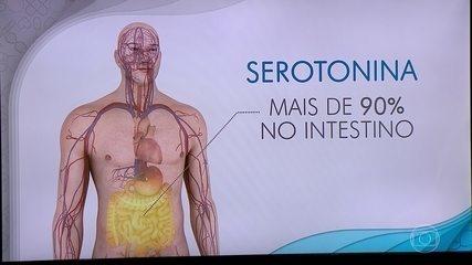 A serotonina, hormônio que regula o humor, o sono e o apetite, é produzida no intestino